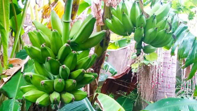 OASIS URBANO, Pan de Banana 02