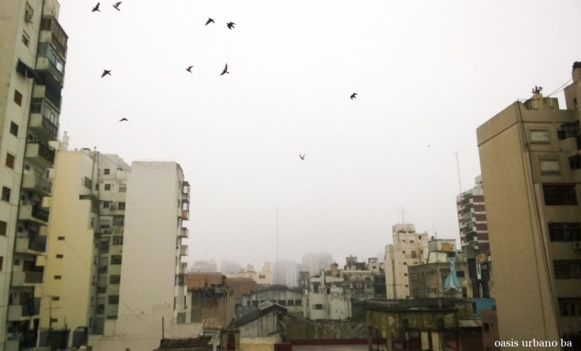 Oasis Urbano BA, Chili sin carne 01